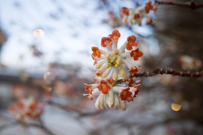 RICOH GR III(GR3)スナップ写真_マクロでの花撮影