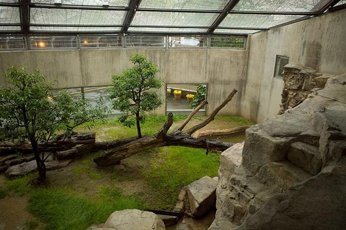 神戸フォトウォーク20190330_ライオンがいるところ