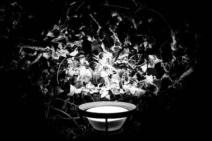 GRIII(GR3)ハイコントラスト白黒作例_寄りで撮影した植物