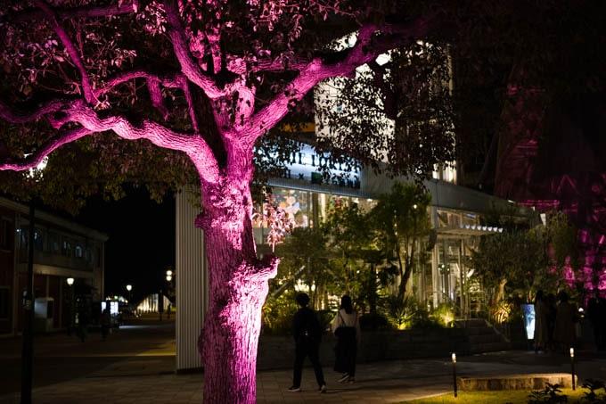 SIGMAfp(シグマエフピー)_ピンク照明が当たった樹木