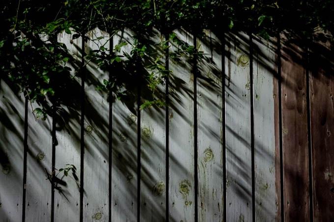 SIGMA fp(シグマエフピー)-神戸北野写真(夜)_草とシルエット