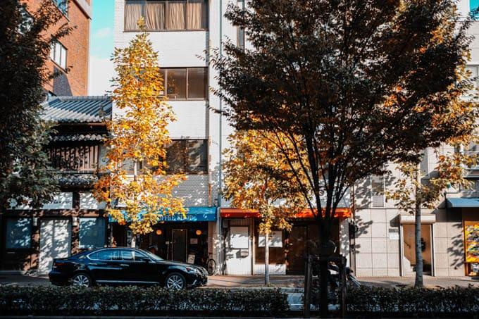 SIGMAfpティールオレンジin京都_木漏れ日