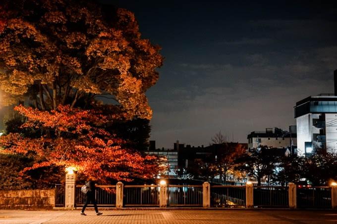 SIGMAfpティールオレンジin京都_紅葉と橋